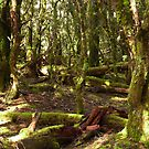 Green forest undergrowth - Tasmania by Leigh Rust