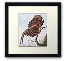 Argus Pheasant Bird Painting Framed Print