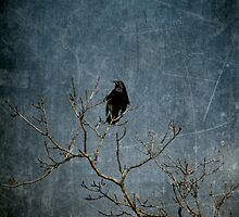 The Watcher by makbet666