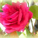 Prettiest in Pink by ElsT