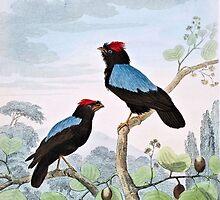 Blue-Backed Manakin Bird Art by goldenmenagerie