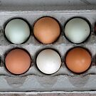 real eggs by Amy Greenberg