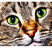 Max Cat Photographic Print