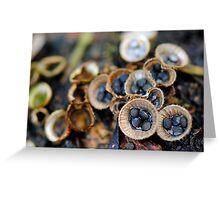 Cyathus stercoreous (Birds nest fungi) Greeting Card