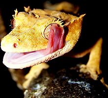 Crested Gecko gone wild by amercnwmn