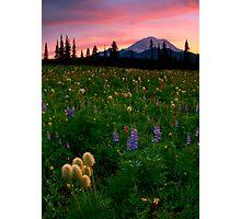 Alpine Garden Photographic Print