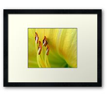 Lily Stamen Framed Print