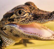 Gator Grins by amercnwmn