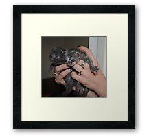 Little Kittens Framed Print