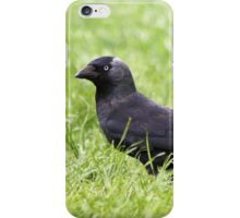 Jackdaw in the grass iPhone Case/Skin