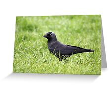 Jackdaw in the grass Greeting Card
