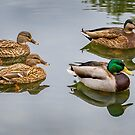 Four Ducks by George Lenz