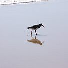 pied oystercatcher walking on beach by footsiephoto