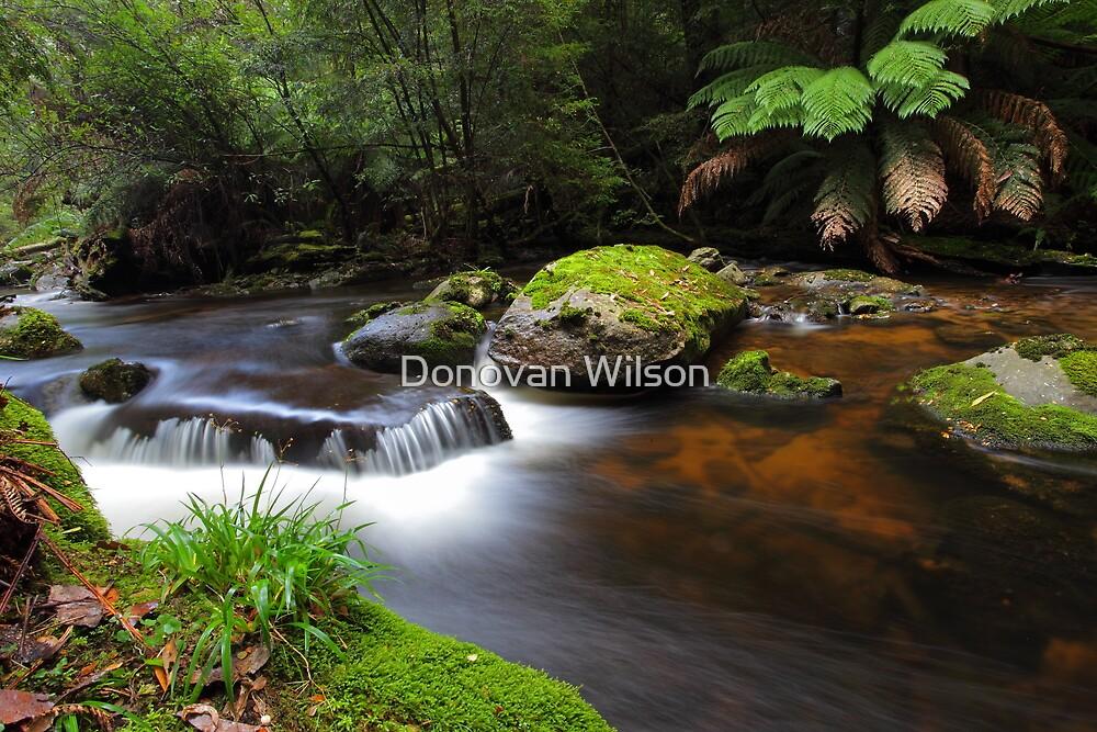 Wilderness by Donovan Wilson