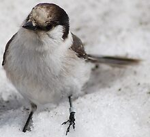 Snow Bird by Tori Snow