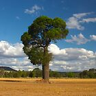 The Bottle Tree- Queensland Australia by AMP  Al Melville Photography