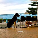 Big dog, little dog by Clare Lawrence