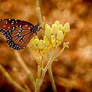 Butterfly Abundance by George Lenz