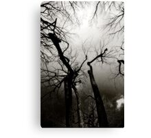 Willow & Sky Canvas Print