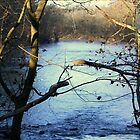 Duck River Henry Horton State Park by royce
