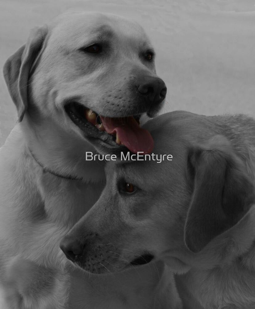 Labrador Retrievers by Bruce McEntyre