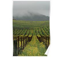 Golden hills of Napa Valley Poster
