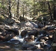 Small Stream, in Arizona by Isaac Daily
