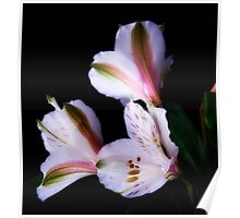 Dew on spring flowers Poster