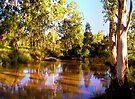 River Gums by Marina Raspolich