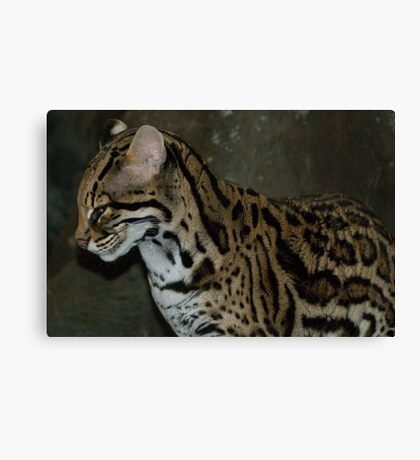 Sly One Canvas Print