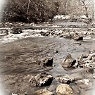 creek view by Phillip M. Burrow