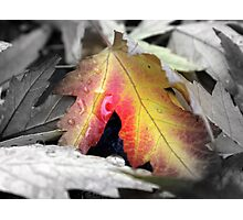 Fall color - Chico, CA Photographic Print