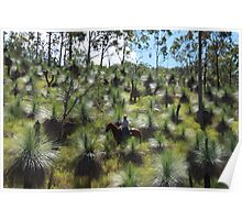 The Valley Of The Grasses - Alex Watson -Equathon - Kilkivan - Queensland Poster