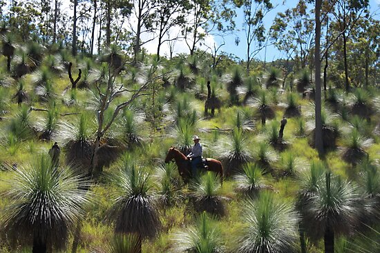 The Valley Of The Grasses - Alex Watson -Equathon - Kilkivan - Queensland by AMP  Al Melville Photography