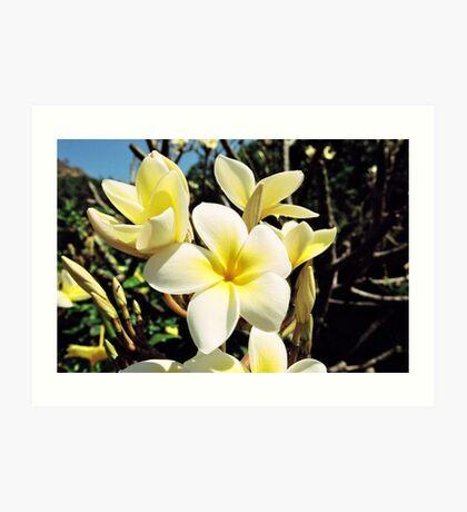 Tropical Plumeria Art Print