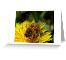 Honey bee  Being Busy Greeting Card