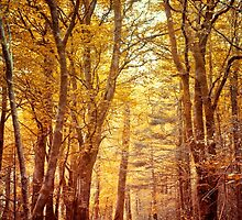 Golden Forest by Marie Carr