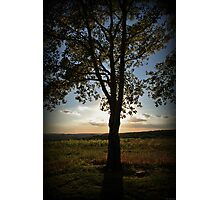 September Solo Photographic Print