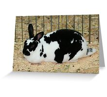 Giant Checkered Rabbit Greeting Card
