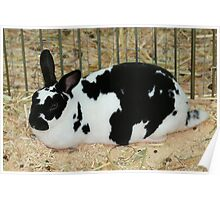 Giant Checkered Rabbit Poster