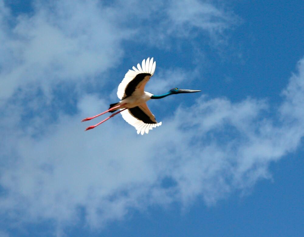 Jabiru in Flight by Lynette Higgs