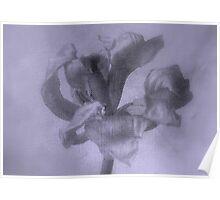 Textured Tulip - JUSTART ©  Poster