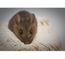 Maurice the Mouse Photographic Print
