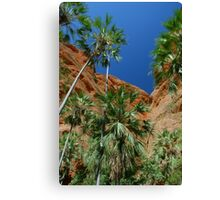 Livistona palms, Purnululu National Park  Canvas Print