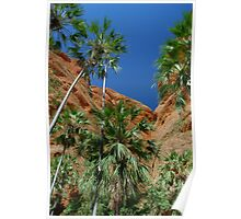 Livistona palms, Purnululu National Park  Poster