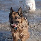 dogs by David Ford Honeybeez photo