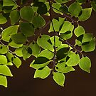 Emerald Canopy by Martie Venter
