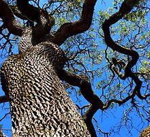 California Tree by Elizabeth Hoskinson