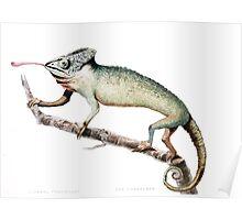 Chameleon Vintage Art Poster