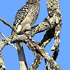 Yellow Billed Hornbill by Michael  Moss